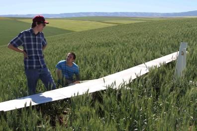 20130615 Flight 3 Wheat Field