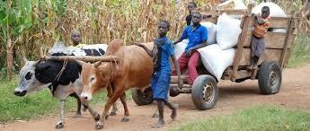 animal uganda
