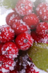 hollyberries-100x150