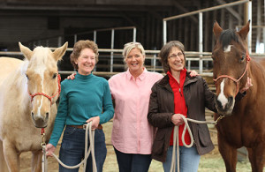 horse-stress-Jacobson,-Pendry,-Erdman-500