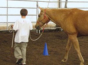horse-stress-child-300