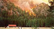 wildfire-by-bugwood.org-2j00