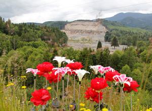 mudslide-flowers