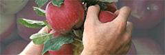 specialty-crops