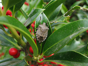 Stink-bug-by-Todd-450