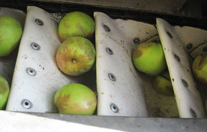apples-500