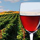 wine-80