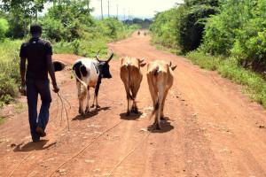 Kenyan-farmer-web