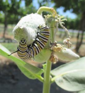 caterpillar-web