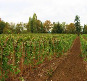 western-Washington-agriculture