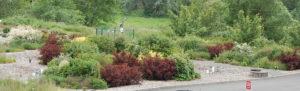 Puyallup-rain-gardens-web