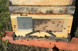 hive-entrance-web